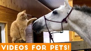 Funniest Videos for Pets to Watch Compilation  Funny Pet Videos