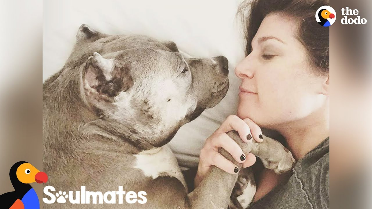 Pit Bull Dog Teaches Mom Everything She Needed To Know About Love | The Dodo Soulmates