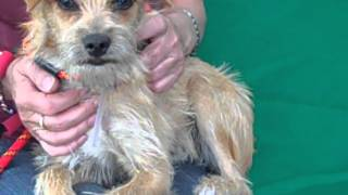 A4840807 Hazel | Terrier Mix Puppy