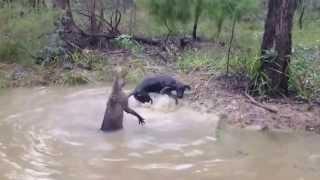 На охоте, бой собаки с непонятным животным