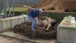 Composting Large Animal Mortalities on Farm
