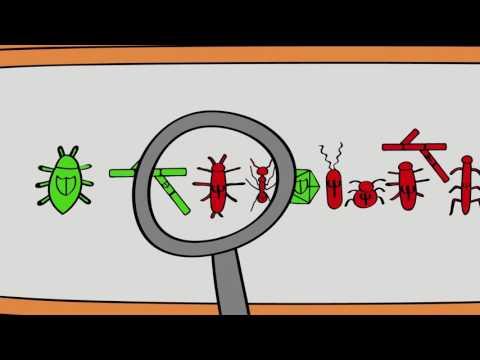 What is biological control? - Видео онлайн