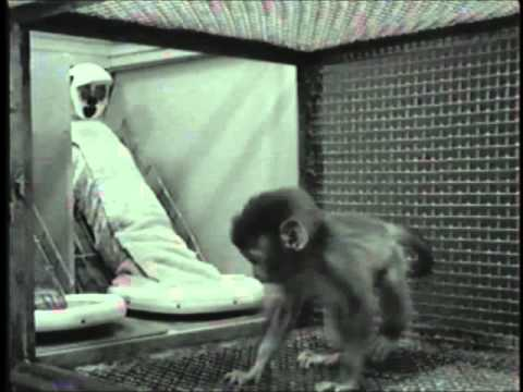 Harlow's Studies on Dependency in Monkeys