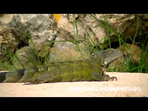 Ban Topa Appartementen & Villa's - vakantie Curaçao - Does Travel & Cadushi Tours