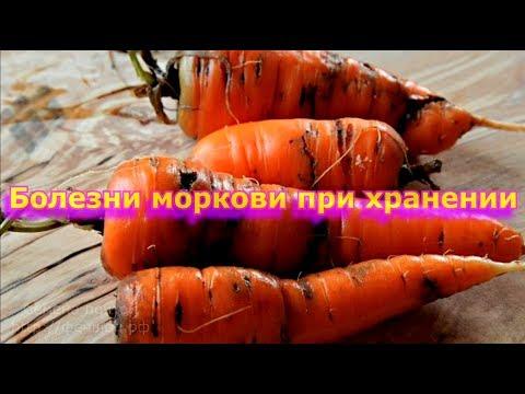Болезни моркови.