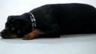 Tara Service Dog In Training Test