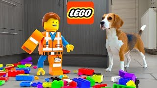 LEGO MAN in REAL LIFE : Emmet vs Funny Dogs