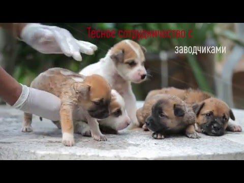 Здоровое питание для собак и кошек с 1968 года