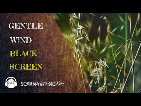 Gentle Wind Black Screen To Help You Obtain A Deep And Restful Sleep