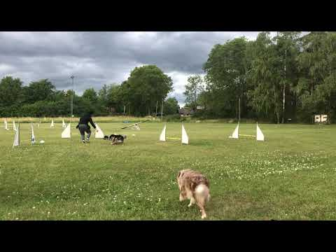 Agility basics with Wonder front cross, back cross and turns
