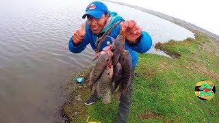 Pesca de Tilapias con Anzuelo | Pesca de Tilapias de Laguna | Pesca