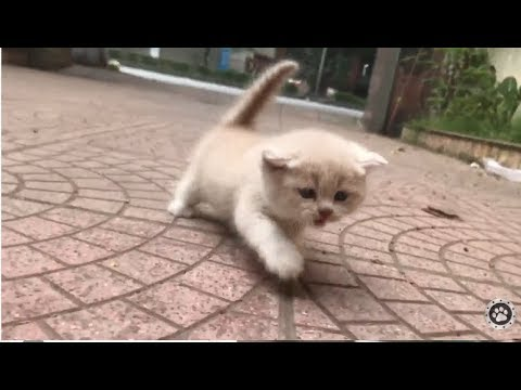 Baby kittens meowing very loudly || CUTE 2020