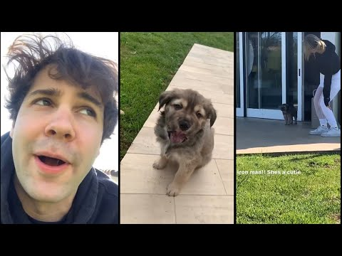 David Dobrik Fosters a Puppy! - Vlog Squad Instagram Stories 26