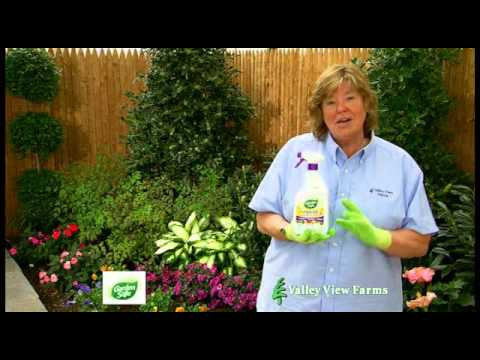 Garden Safe Fungicide 3 - YouTube