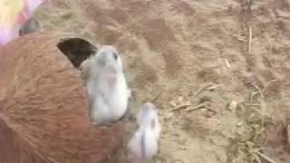Заботливая мама хомячиха ч2/ Домашние хомяки/Джунгарики/Смешные животные/Видео про животных