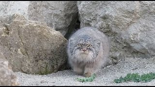 PALLAS CAT Remix - Hall & Oats Private Eyes