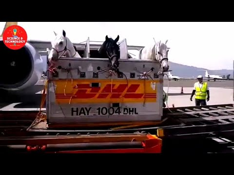 How to Export Numerous Sheep, Cow-Cattles, Pigs, Horses, Chickens?Modern Livestock-Poultry Transport