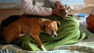 Curso ensina comunicação com animais de estimação