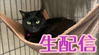【ランチ生配信】ポカポカ祝日のお昼は猫でも見て過ごしませんか?生配信