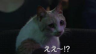 チャンネル登録はこちら!http://goo.gl/ruQ5N7 映画『先生と迷い猫』登...