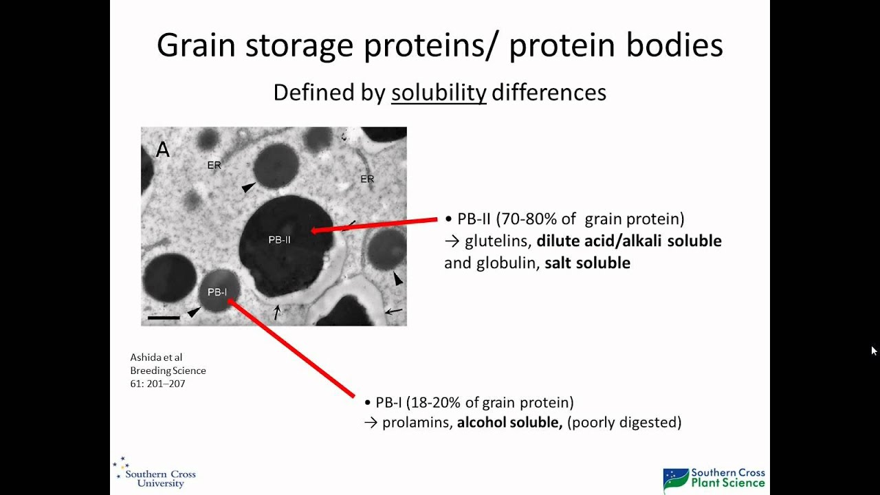 small resolution of rice grain storage protein composition