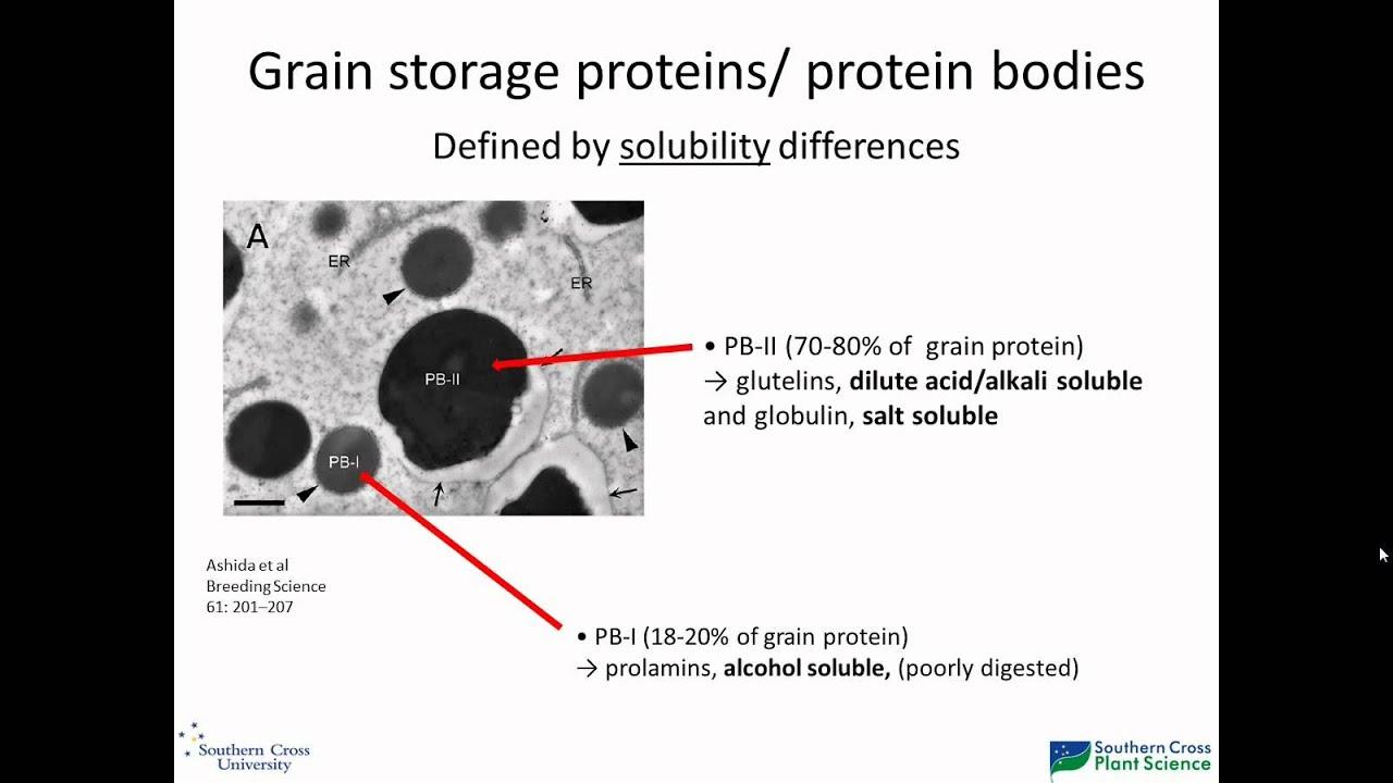 medium resolution of rice grain storage protein composition
