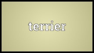 Terrier Meaning