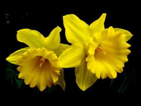 Цветы Украины