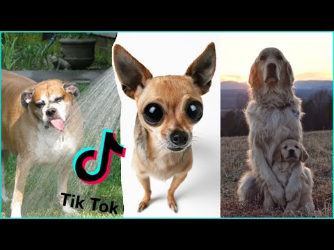 BEST Dog TikTok Compilation 2020