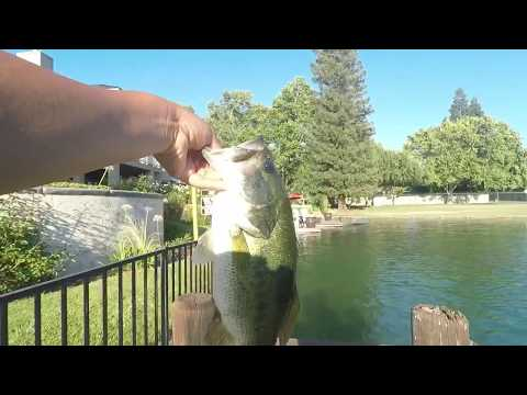 Fresno Bass Fishing