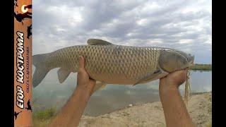 Рыбалка Ловим амура и сазана на реке 18 июля 2021г