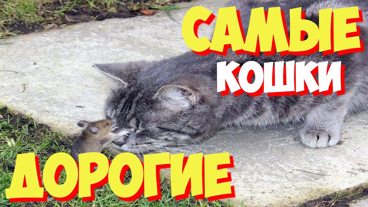 Дикие кошки Серенгети Мир животных - YouTube