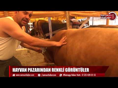 What is the latest situation in Kurban Market?