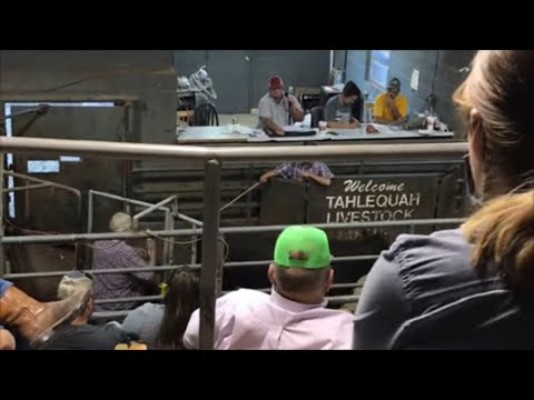 Going To Cattle Auction - Cattle Talk 10/08/2020