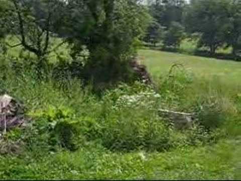 grassman bigfoot sighting youtube