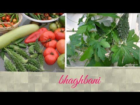 घर की बगिया में सब्जियाँ // Which vegetables have we planted//