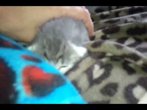 Extremely Tiny Newborn Kitten meow, he never stops crying