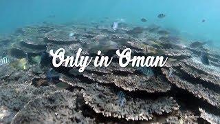Oman Summer