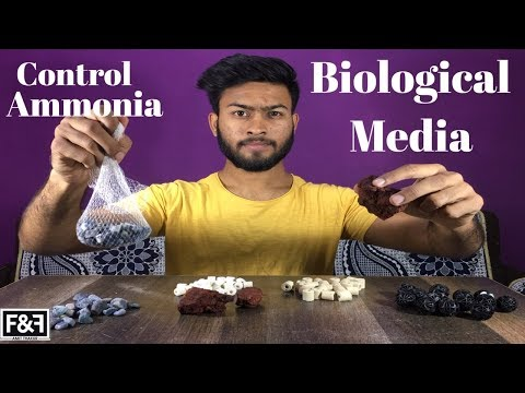 Best Aquarium Biological Filter Media | Best Way To Filter Your Aquarium Water