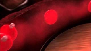 不可思議的人體秘密 - 透視人體  人體機器內幕