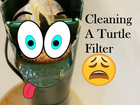 HOW TO CLEAN A TURTLES FILTER 2017