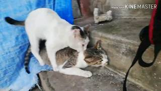 Funny Cats 🐱 wrestling