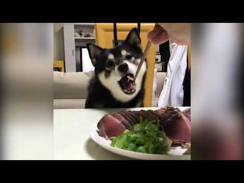.     .  2019 # 1 Funny Cats and Dogs.ANIMALS
