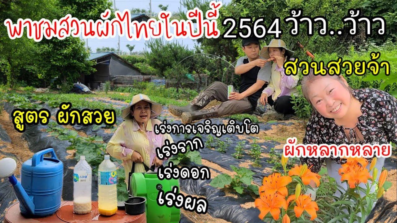 EP.524 พาชมสวนผักไทยในปีนี้ 2564 สวนสวย ผักหลายชนิด สูตรหมักฮอร์โมนผักสวย ผลผลิตดี ไม่พึ่งสารเคมี