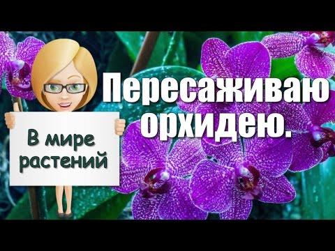 Фотограф из Белоруссии снимает крайне провокационные