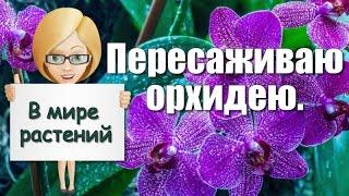 Пересаживаю орхидею(, 2016-03-29T18:49:45.000Z)