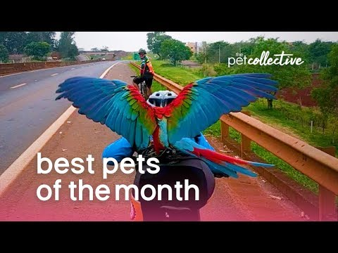 Best Pets of the Month | January 2020