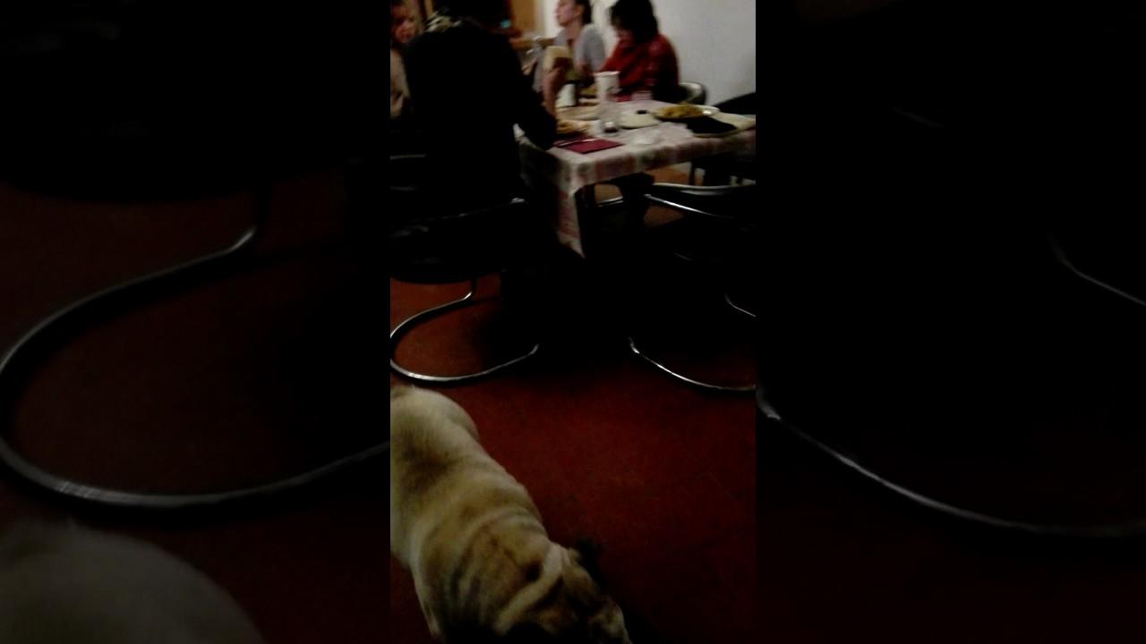 Cane E Gatto Ma Chi Lha Detto Youtube