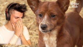 اتحداك ما تتاثر ( كلب يبكي بسبب فراق صديقه ) !!