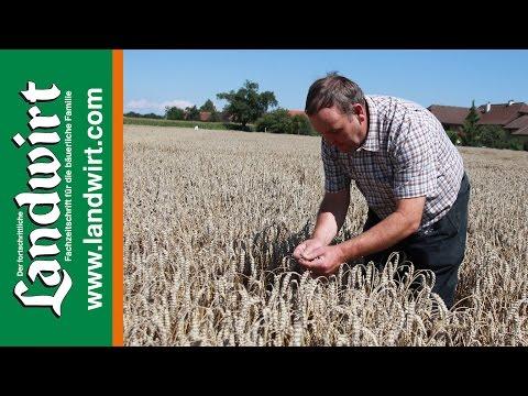 Saatstärke bei Weizen reduzieren – Ertrag halten